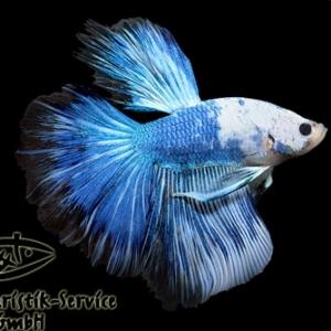 HM-Blue-Marble
